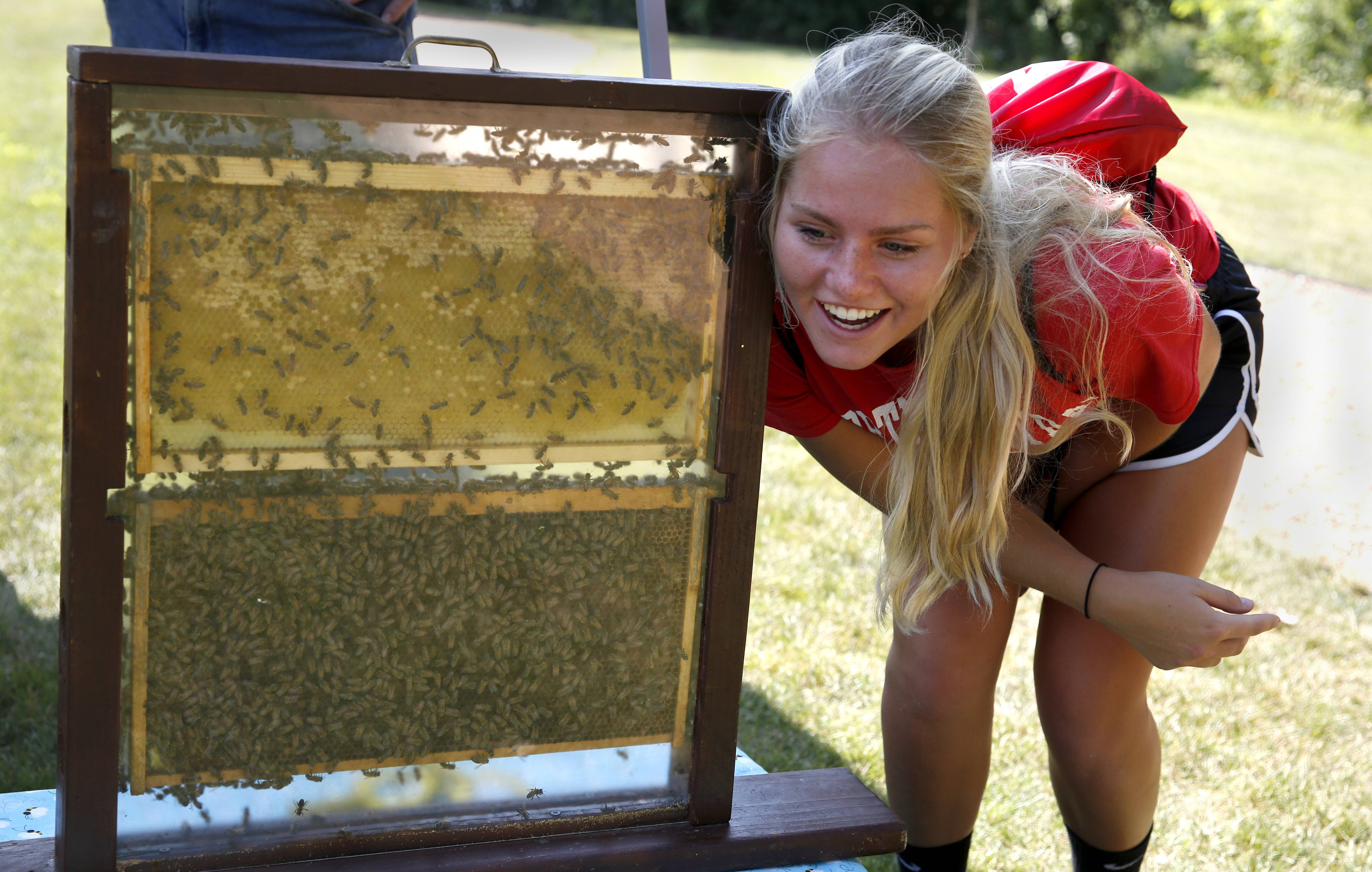 Rachel Daye, a student at North Central College, listens to the sound of Ed Bell's beehive. According to Bell, bees surround the queen, who lays 1,200 to 1,500 eggs per day. Bell, of Oswego, has been keeping bees for 11 years.