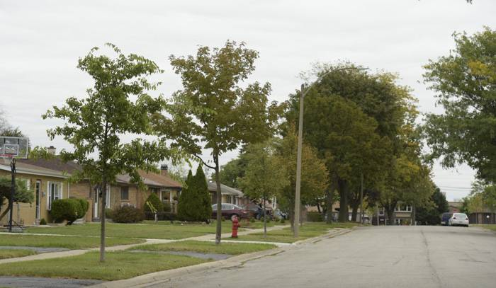Washington Street in Bensenville is a mix of new and old trees.